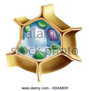 Strange Plant Cell Drawing Stock Photo 276780260 Alamy Wiring Digital Resources Inamasemecshebarightsorg