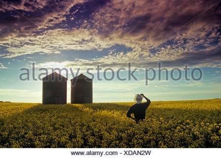 A farmer overlooks a blooming canola field with grain bins in the background, Tiger Hills, Manitoba, Canada - Stock Photo