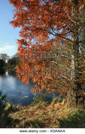 tree park leaves season fresh water lake inland water water foliage weather - Stock Photo