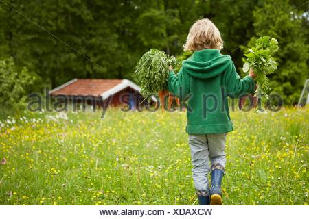 Rear view of boy carrying carrots across garden - Stock Photo