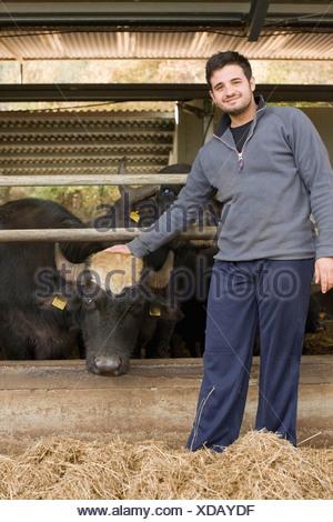 Bisons for mozzarella production - Stock Photo