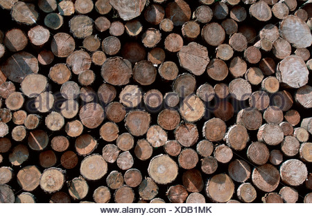 Pile of wood, Common Silver Fir, Schleswig-Holstein, Germany / (Abies alba) - Stock Photo