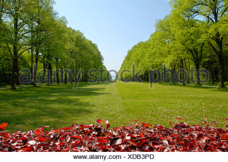 Park with lawn in forest aisle at Schloss Herrenchiemsee Herreninsel Chiemsee Bavaria Germany - Stock Photo