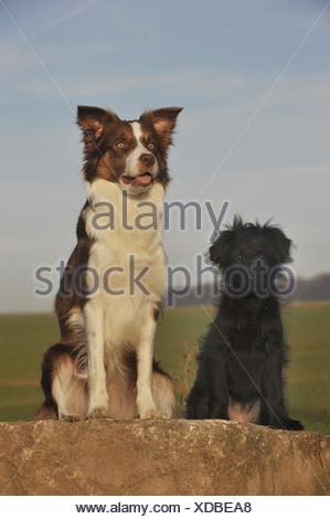 2 dogs - Stock Photo