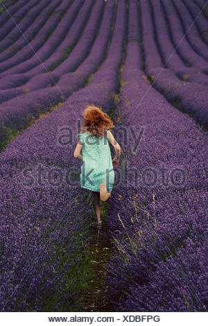 Back view of girl (6-7) running through lavender field - Stock Photo