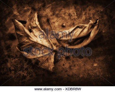 Leaves from a plane tree - Stock Photo