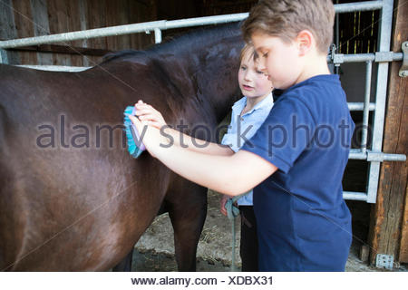 Two boys grooming horse in stable - Stock Photo