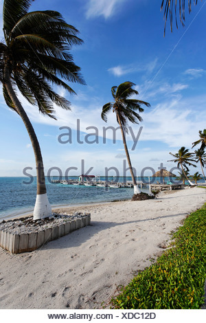 Beach with palm trees and a jetty, Turneffe Flats, Turneffe Atoll, Belize, Central America, Caribbean - Stock Photo
