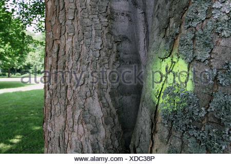 flagged tree in a park, Germany - Stock Photo