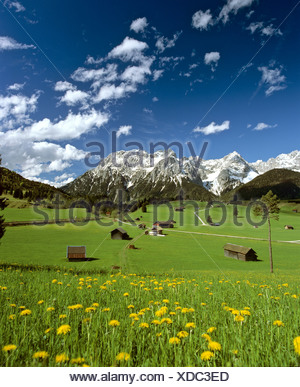 Tonihof Wildlife Park, Flower meadow in spring, Wetterstein Range, Mittenwald Forest, Upper Bavaria, Bavaria, Germany, Europe - Stock Photo