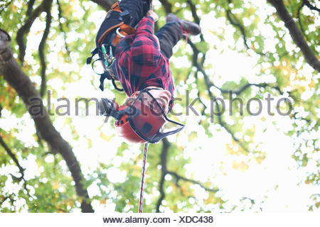 Trainee teenage male tree surgeon hanging upside down from tree branch - Stock Photo