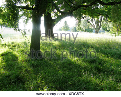 Sun shining through trees in summertime - Stock Photo