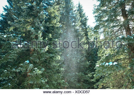 Sprinkle of snow in green forest - Stock Photo