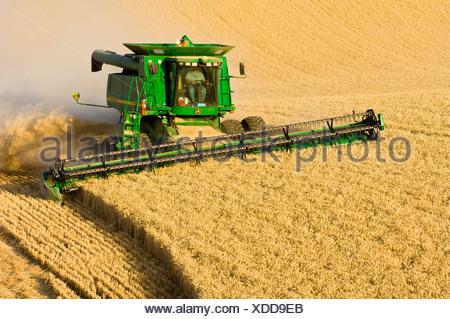A John Deere combine harvests Soft White wheat on rolling hillside terrain / Palouse Region, near Pullman, Washington, USA. - Stock Photo