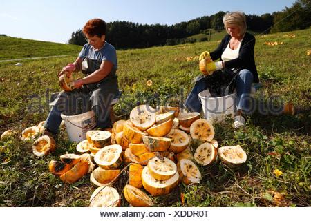 Women harvesting pumpkin seeds in Leutschach, Styria, Austria, Europe - Stock Photo