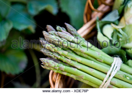 A bunch of asparagus in a basket of fresh vegetables - Stock Photo