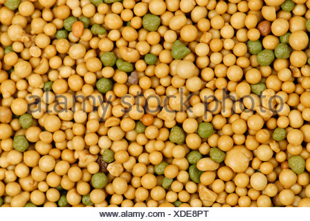 Miracle Grow slow release all purpose plant food fertilizer granules - Stock Photo