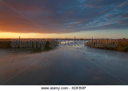 Evening light in the Bodstedter Bodden with Zingst in the evening, Western Pomerania Lagoon Area National Park, Germany - Stock Photo