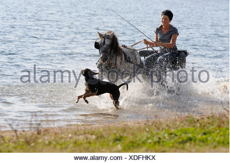 Young woman riding through the water in a carriage with a dog - Stock Photo