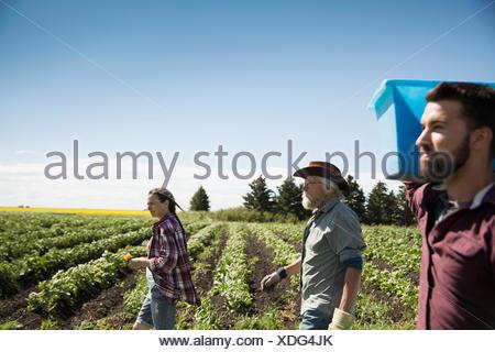 Farmers walking along green crops on sunny farm - Stock Photo