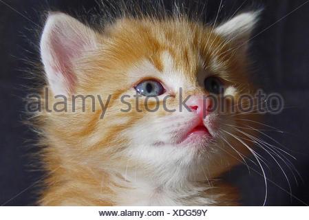 Turkisch Angora Angora Cat Stock Photo 283259913 Alamy