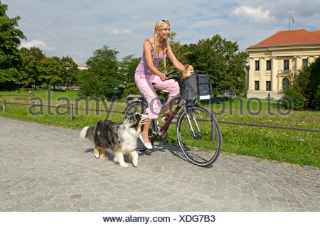 Woman with a Chihuahua in a basket riding a bicycle, Australian Shepherd dog running alongside - Stock Photo