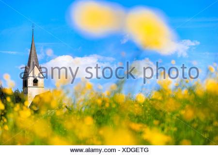 Blooming of yellow flowers around the alpine church of Schmitten, Canton of Graubünden, district of Albula, Switzerland - Stock Photo
