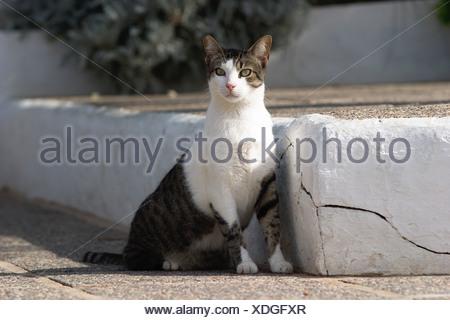 cat in Sant Agusti des Vedrá Ibiza - Stock Photo