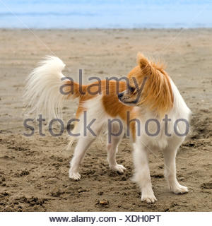 holiday, vacation, holidays, vacations, beach, seaside, the beach, seashore, - Stock Photo