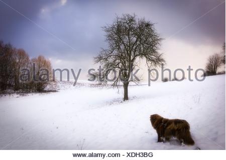 Dog in a snow landscape Weingarten Germany - Stock Photo