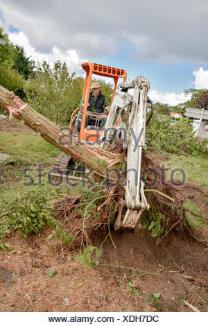 Using a digger to remove a tree - Stock Photo