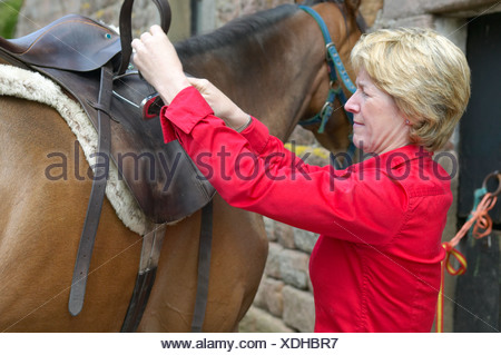 Lady horserider jockey putting saddle on thoroughbred horse - Stock Photo