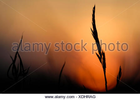 Blade of grass in the sunset - Stock Photo
