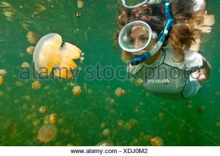 Snorkeler in Jellyfish Lake, Palau,, Micronesia / (Mastigias papua) - Stock Photo