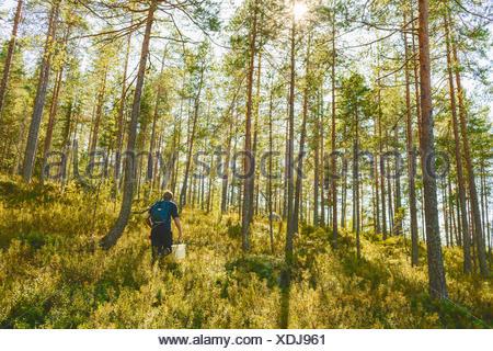 Finland, Keski-Suomi, Jyvaskyla, Man walking in pine forest - Stock Photo