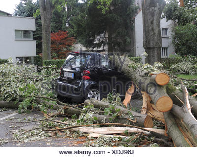 tree fallen on parked car, damages by storm front Ela at 2014-06-09, Germany, North Rhine-Westphalia, Ruhr Area, Bochum - Stock Photo