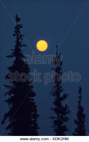 Black spruce trees (Picea mariana) and sun with smoke from forest fire Nahanni National Park Northwest Territories Canada - Stock Photo