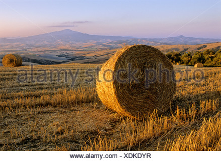 Bale of straw, harvested wheatfields, landscape around Radicofani and Monte Amiata at sunset, Val d' Orcia near Monticchiello,  - Stock Photo