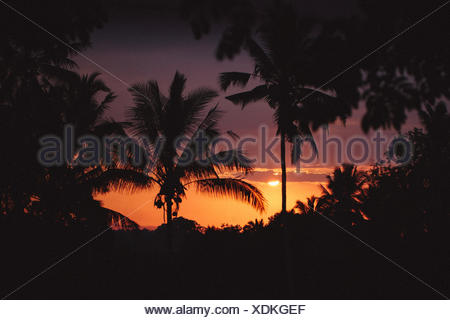 Indonesia, Bali, Ubud, Palm trees silhouetted against sunset - Stock Photo