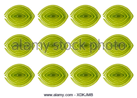 Leek slices in rows, cross-section, cutout - Stock Photo
