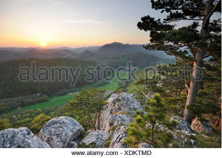 Black pine and Peilstein mountain faces in the evening light, Triestingtal valley, Lower Austria, Austria, Europe - Stock Photo