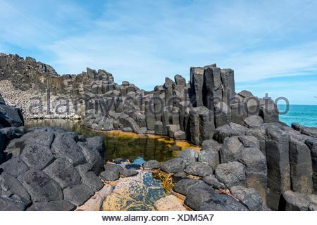 Hexagonal basalt column by the sea, Blackhead, Dunedin, Otago, South Island, New Zealand