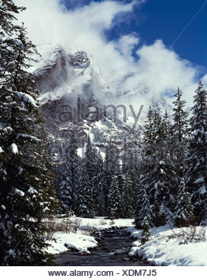 Kane Creek flows beside snow covered evergreens in winter below cloud shrouded Devil Bedstead Mountain Pioneer Mtns ID - Stock Photo