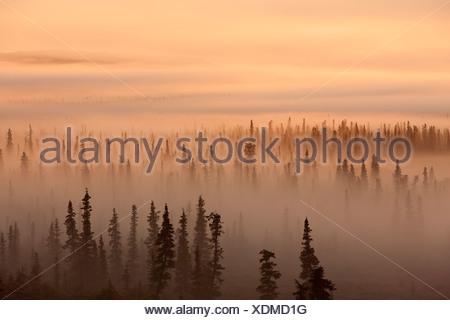 Sunrise over a foggy forest, Katmai National Park and Preserve, Southwest Alaska, Autum - Stock Photo