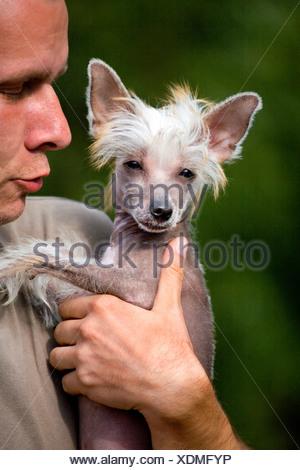 Chinese Crested Dog - Stock Photo