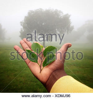 Human hand holding plant with tree in background, Gauteng, Johannesburg, South Africa