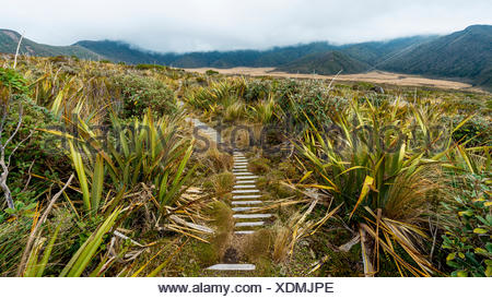 Trail through swampland, Pouakai Circuit, Egmont National Park, Taranaki, North Island, New Zealand - Stock Photo