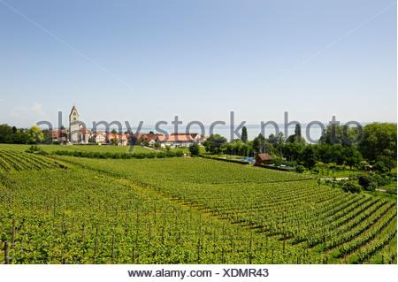 Winegrowing, vineyard in Hagnau on Lake Constance, Baden-Wuerttemberg, Germany, Europe - Stock Photo