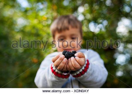 Hands of little boy holding blackberries - Stock Photo