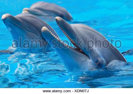 beautiful beauteously nice - Stock Photo
